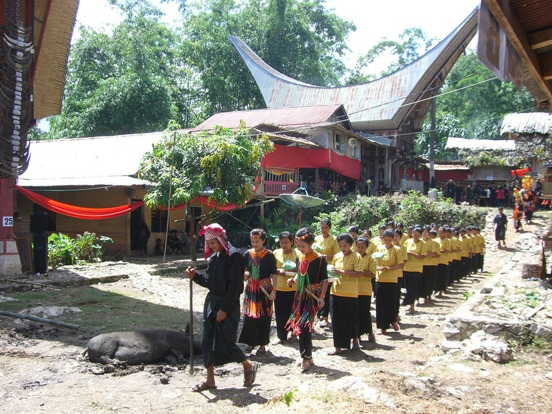 Indonesia Rituals Weddings And Funerals: Toraja Death Rituals L How To Experience This Unique