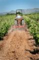 Domaine Rety   Travail de la vigne