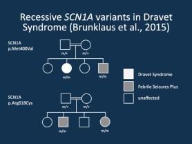 Risultati immagini per dravet syndrome