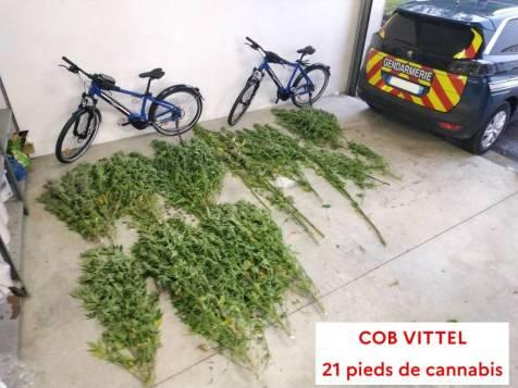 Cannabis_Gendarmerie-2