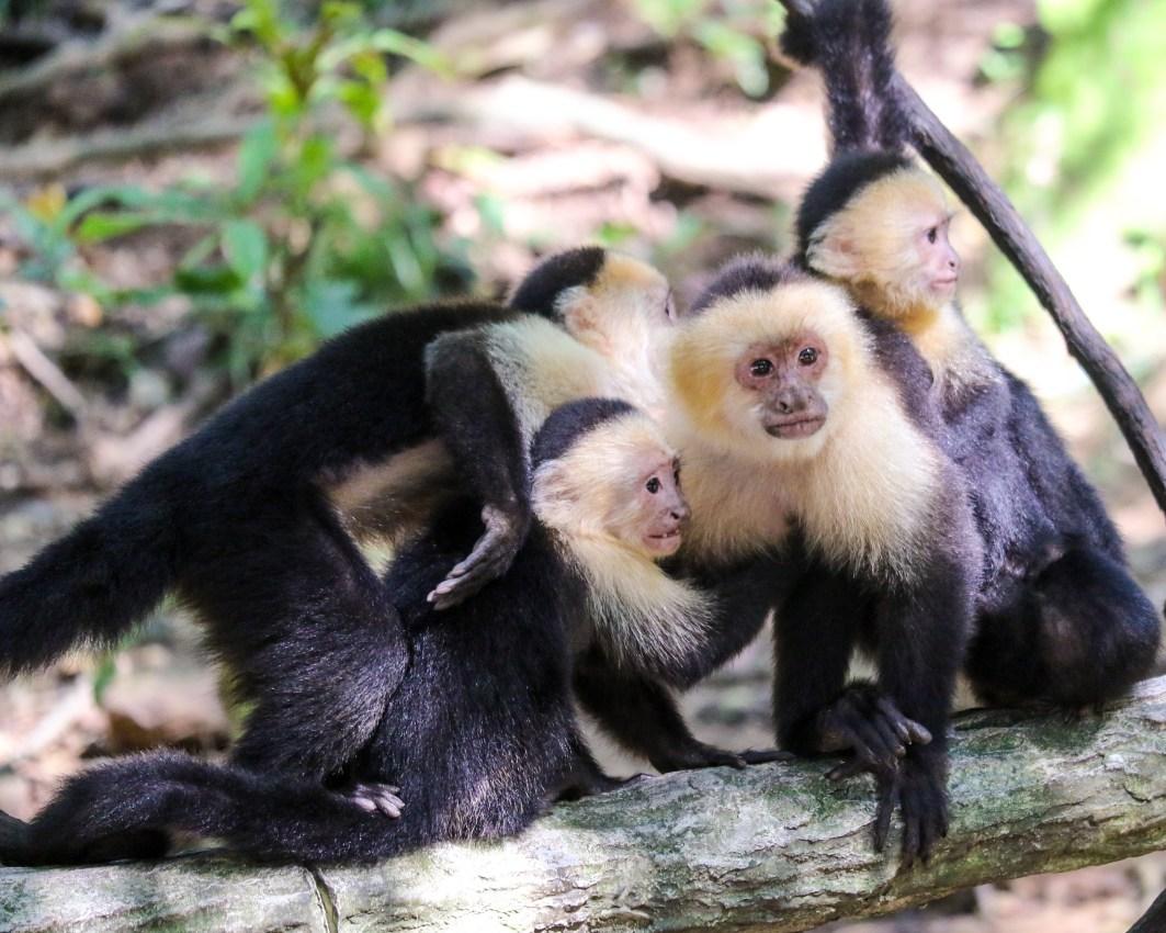 Roatan Monkeys (26 of 29)