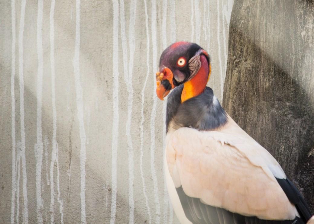 4Jul15_Barranquilla_Zoo-17
