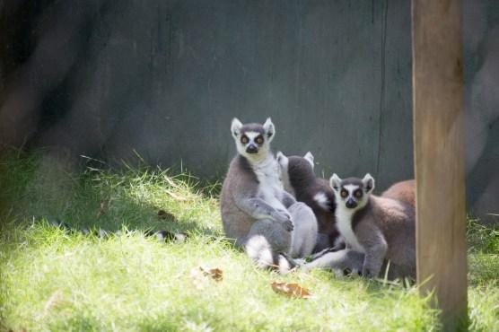 4Jul15_Barranquilla_Zoo-35