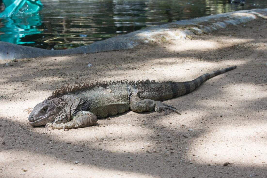 4Jul15_Barranquilla_Zoo-48