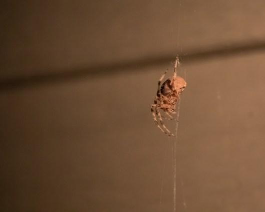 Spider_27AUG15-9