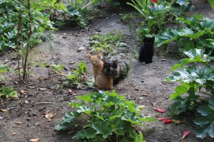 Cats of the Garden Tomb