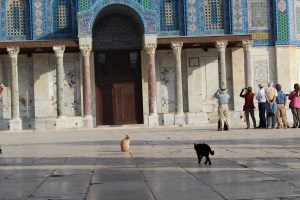 Cats on the Temple Plaza