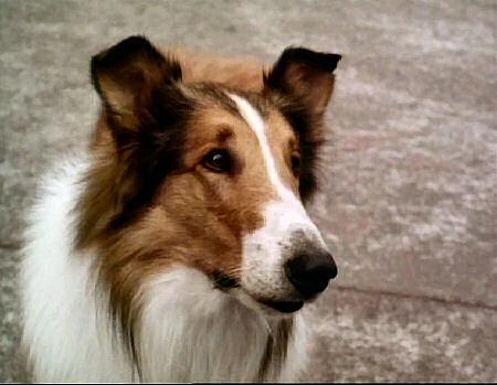 Lassie Web Episode Guide Season 16