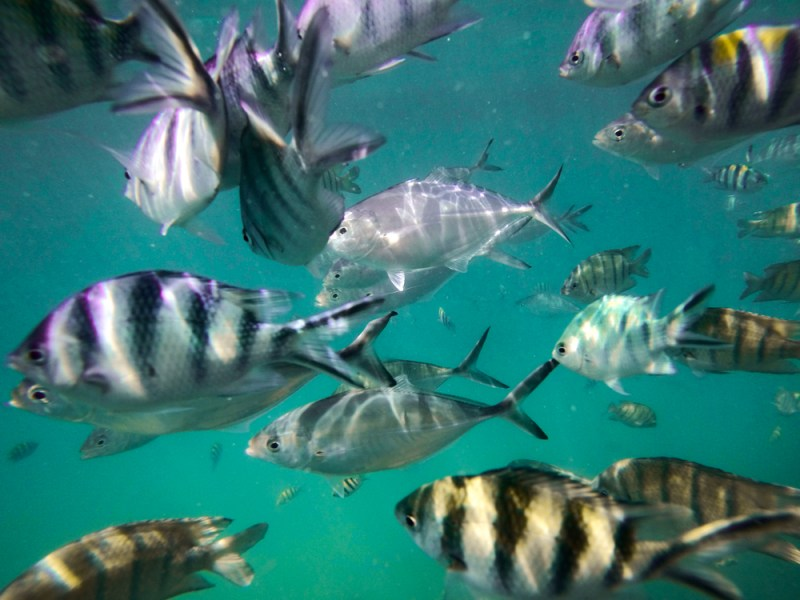 Snorkeling Koh Samui