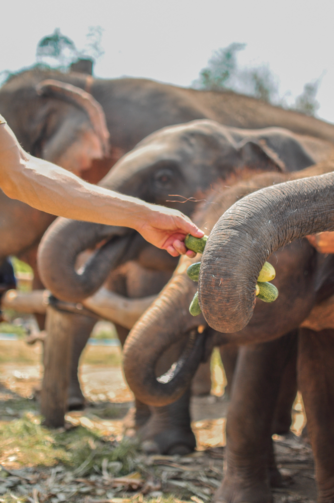 Elephant Nature Park Chiang Mai Thailand-0420