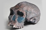 Crâne prototypé par laminage de papier
