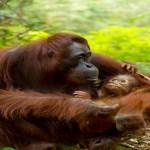 Nejlepší rodiče zvířecí říše