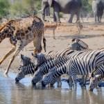 8 nejznámějších safari na světě