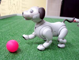 Robotičtí mazlíčci: Konec alergiím a loužičkám?