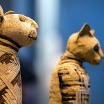 Rentgen kočičí mumie ze starého Egypta odhaluje bizarní výsledky!