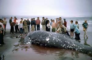 Jak se v Oregonu chtěli zbavit velryby