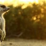 Superschopnosti, které pomáhají zvířatům přežít