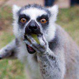 České zoo, jak je neznáte