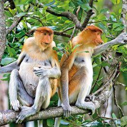 Borneo, ostrov lovců lebek