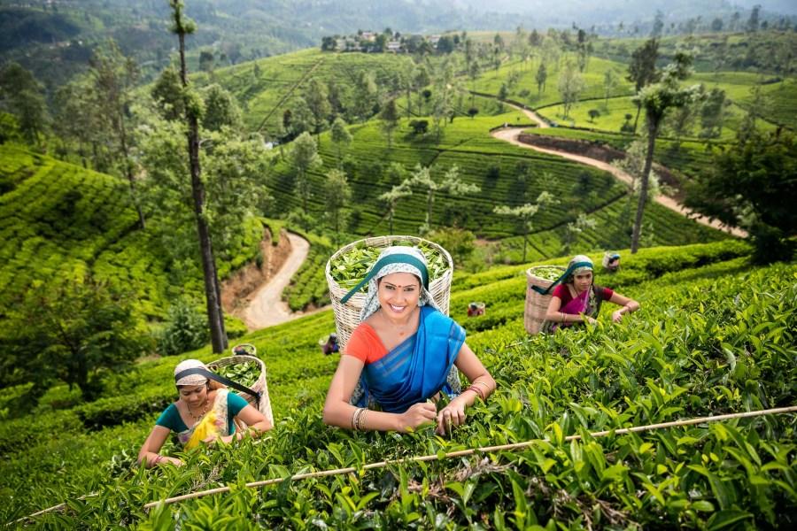 Šrí Lanka: Ostrov slonů a čaje