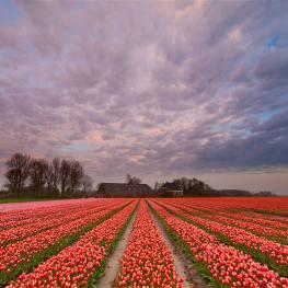 4 zajímavosti o Holandsku: Kde se nachází čtvrť červených luceren?