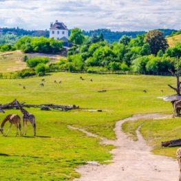 Nejkrásnější zoologické zahrady světa, které rozhodně stojí za návštěvu