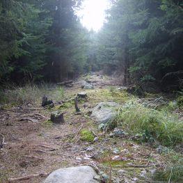 Kamenné řady u Kounova: Vyzařují tajemnou energii?