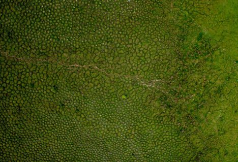 Enormous mounds (as seen from the air) in the tropical wetlands of South America have long puzzled scientists.