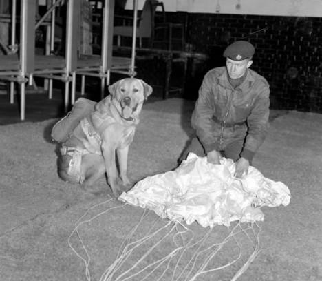 Bildnummer: 60149391  Datum: 01.01.1900  Copyright: imago/United Archives InternationalNo caption sheet paratrooper with parachute and dog, Fallschirm, Fallschirmspringer, fallschirmspringen PUBLICATIONxINxGERxSUIxAUTxONLY kbdig 1900 hoch Fallschirm Fallschirmspringer No RAF and caption dog fallschirmspringen parachute paratrooper sheet with  60149391 Date 01 01 1900 Copyright Imago United Archives International No Caption Sheet Paratrooper With Parachute and Dog Parachute Skydivers Parachute jumping PUBLICATIONxINxGERxSUIxAUTxONLY Kbdig 1900 vertical Parachute Skydivers No RAF and Caption Dog Parachute jumping Parachute Paratrooper Sheet With