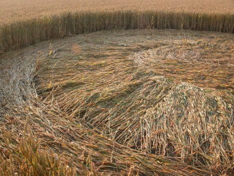 www.crop-circles.eu