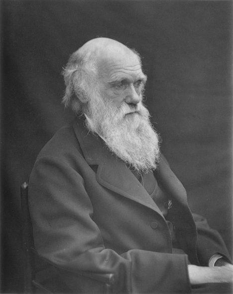 """Že se stromy ukládají ke """"spánku"""" jako první popsal Charles Darwin."""
