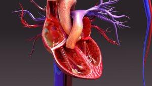 Víte, jak funguje lidské srdce?