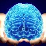 Věčná záhada vědy: Jak funguje mozek?