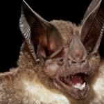 Tajemství netopýrů odhaleno!