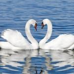 Intimní život zvířat odhalen: Které druhy jsou nejvíce promiskuitní?