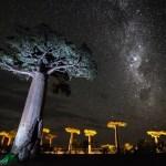 Znáte nejpodivnější stromy naší planety?