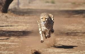 Znáte 10 nejrychlejších zvířat planety?