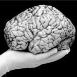 Alzheimerova choroba má vazby na virus herpes, tvrdí vědci