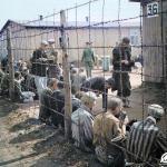 Dobrovolně v Osvětimi: Kdo byl špionem v nejstrašnějším vyhlazovacím táboře?