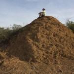 Termití gigant: Kolonie připomínající Velkou Británii!