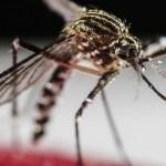 """Nové odhalení: Pilulky na hubnutí berou komárům """"chuť k jídlu"""""""
