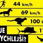 389 km za hodinu aneb nejrychlejší zvířata na světě