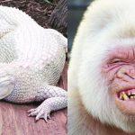Mrkněte s námi na vzácné zvířecí albíny