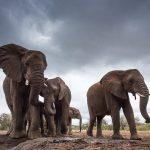 8 zvířecích obrů: Kdo jsou největší tvorové obývající souš, vodu či vzduch?