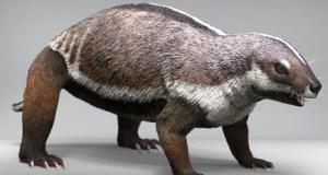 Neznámý živočich, který na Madagaskaru