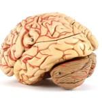7 historických omylů světové vědy: Čemu tehdejší chytré mozky věřily?