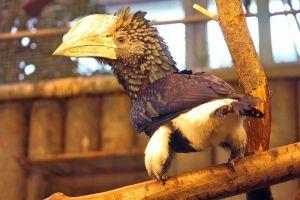V Zoo Liberec se poprvé v historii podařilo odchovat zoborožce šedolícé