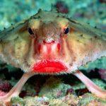 Podmořské kreatury: Které jsou nejpodivnější?