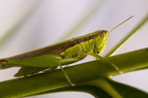 Hmyzí nindžové: Jejich superschopnosti vyrážejí dech!