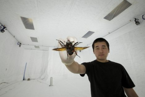 Hirotaka Sato holding a flower beetle fitted with a micro-electro-mechanical system.
